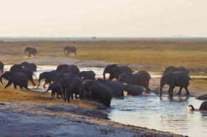 Malawi, Zambia & Botswana Small Group Tour