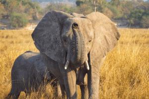 Malawi, Zambia & Botswana Group Tour