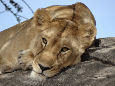 Kenya & Tanzania Small Group Tour