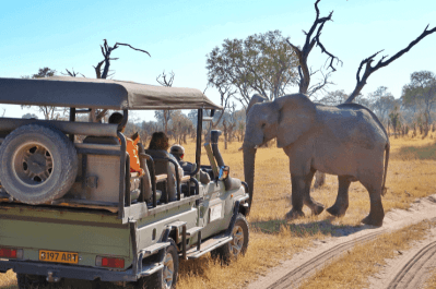 Moremi Game Reserve Botswana Group Tour - Rock My Adventure