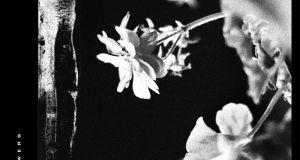 Jinjer - Wallflowers Album Cover Artwork
