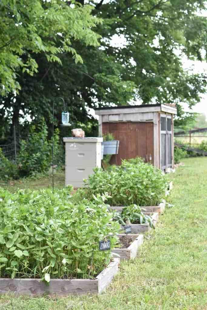 homestead beginner garden