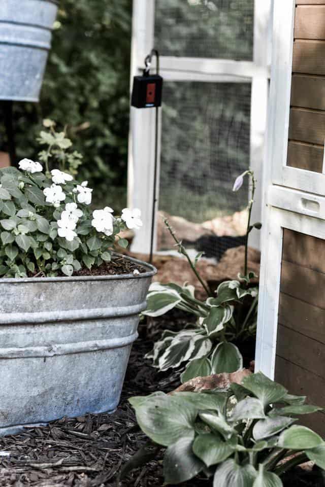 Chicken Coop Landscaping Ideas