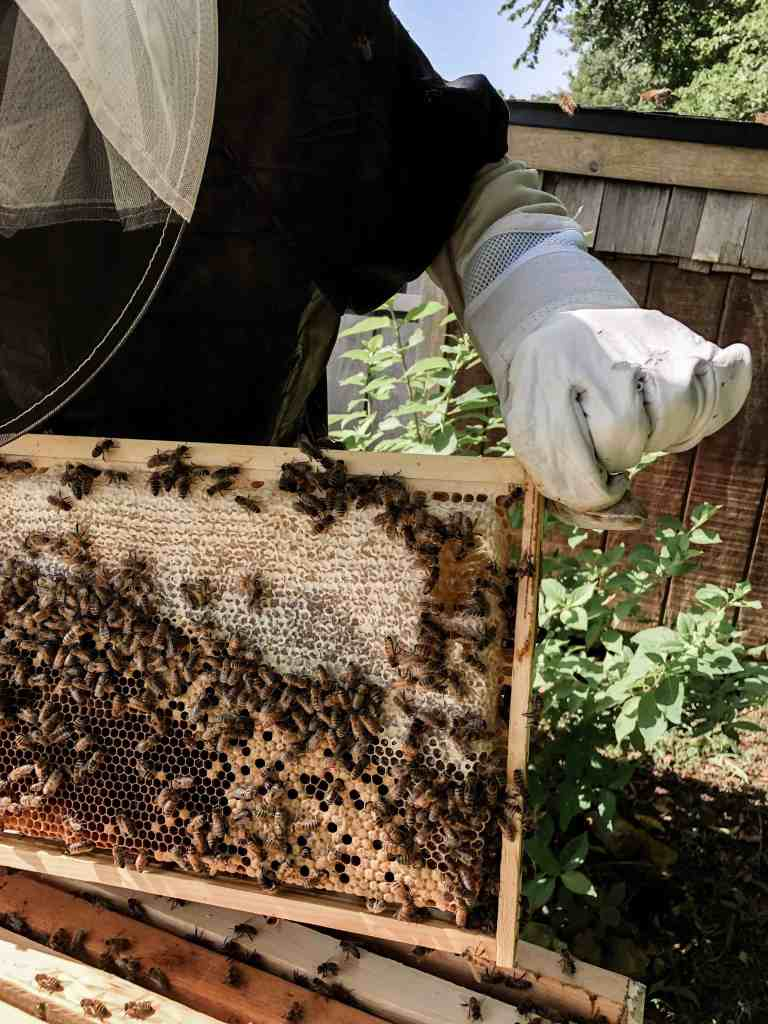 How to Get Started in Beekeeping - The Basics for the Backyard Beginner