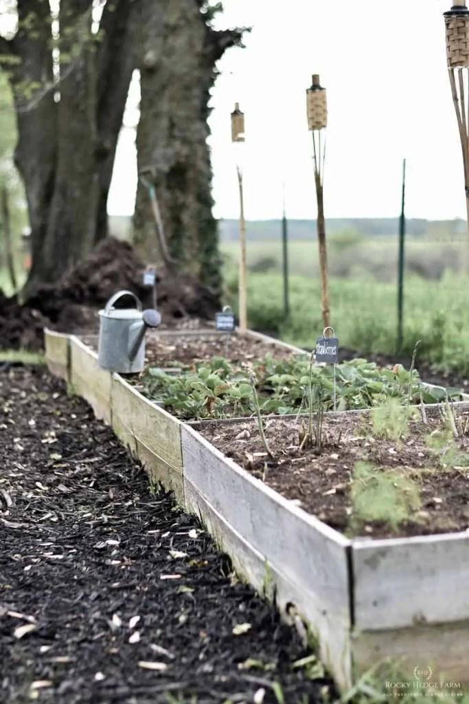 vegetable garden raised bed