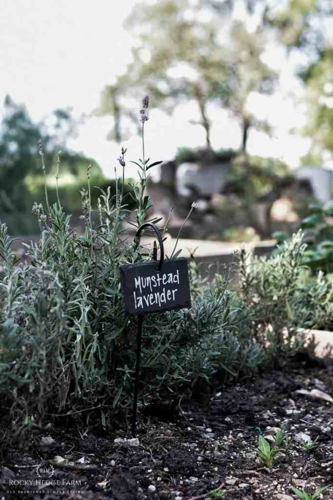 Best Plant Markers