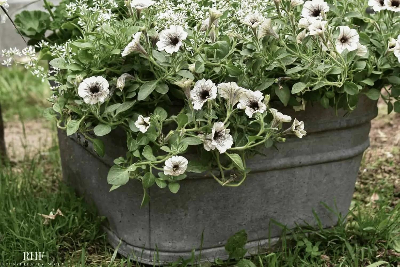 galvanized washtub planter