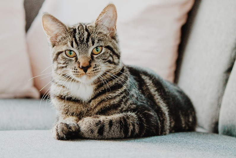 你知道為什麼 日本人很喜歡貓 嗎? 6