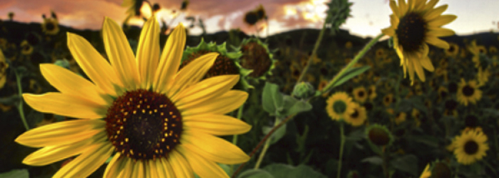 When Should You Visit Colorado Springs? | Spring