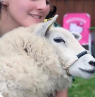 Dashy the sheep is such a handsome chap