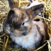 A beautiful 2 week old rabbit kit
