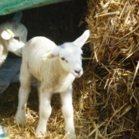 Dashy was curious as a lamb and is now positively nosy!