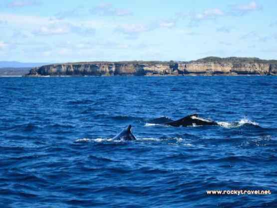 Whale Watching Tour Huskisson