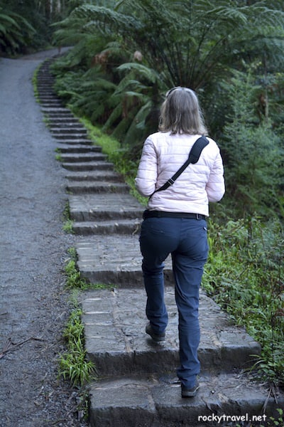 Top Things To See And Do In The Dandenong Ranges From