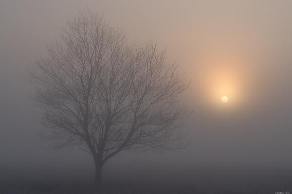 Animals And Birds Wallpaper Cherry Tree Silhouette In Fog Spring Upper Peninsula