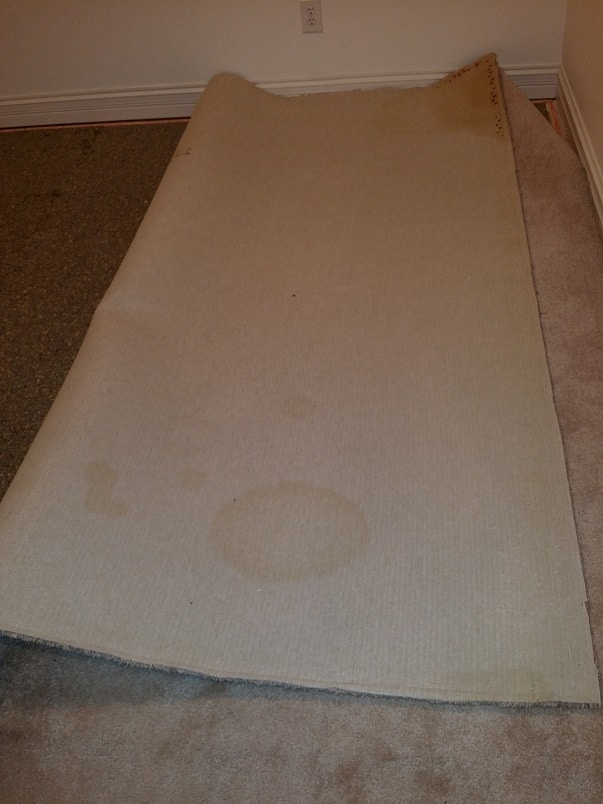 Picture of carpet with Pet urine contamination on the backing