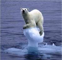 polar bear in disrupted homeostasis
