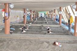 Ibusuki - gorące piaski