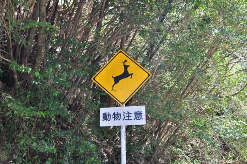 Yakushima, Uwaga na jelonki