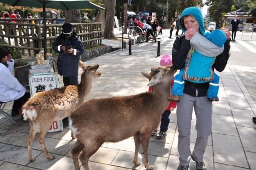 Japonia - Nara
