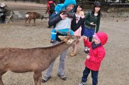Nara - karmienie jeleni