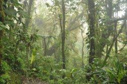 Roślinność w lasach chmurowych Monteverde