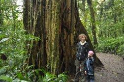 Drzewa w lasach chmurowych Monteverde