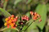 Roślinność w lasach deszczowych Bosque Eterno de Los Ninos