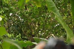 Ukryty leniwiec w Manuel Antoio
