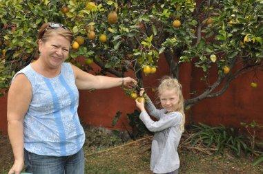 Oliwia zbiera pomarańcze z ogrodu w Kostaryce