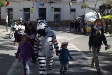 Sucre - zebry