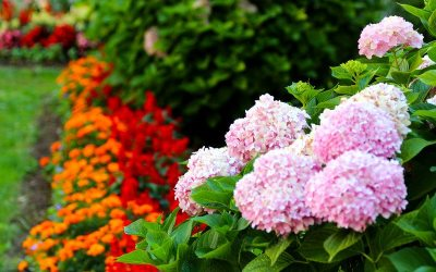 Tips for Beautiful Florida Annual Flowers