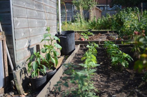allotment-22