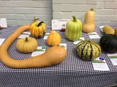 Seasonal squash in all shapes and sizes