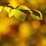 autumn light mood atoshere bokeh