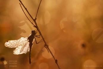 Nature fine art photography