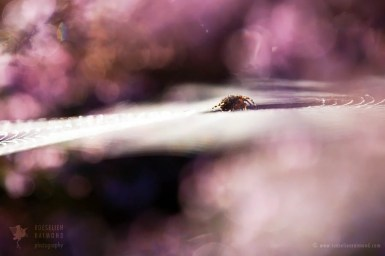 Fine art nature photography cobweb heather