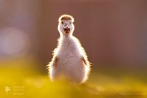 gosling cute