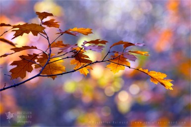 autumn light leafs mood nature photography fine art