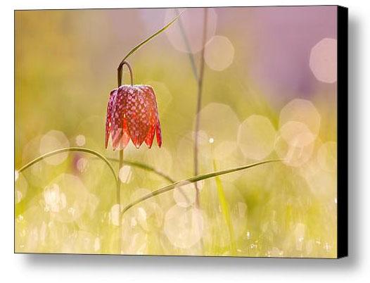 Flower photography art
