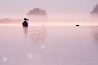 mist fog sunrise nature photography fine art fox snow