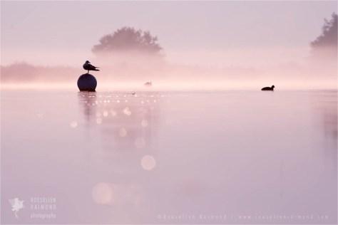 mist fog sunrise nature photography fine art fox snow