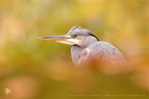 bird fine art photography