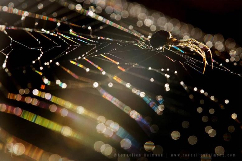 web dew spider spiderweb sunrise