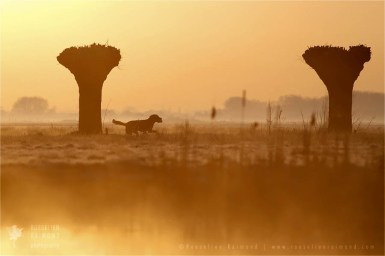 mist fog Netherlands scenery landscape mood atmosphere sunrise