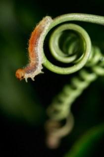 Unknow Larva