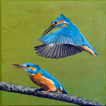 Kingfisher LoveAcrylics on Canvas