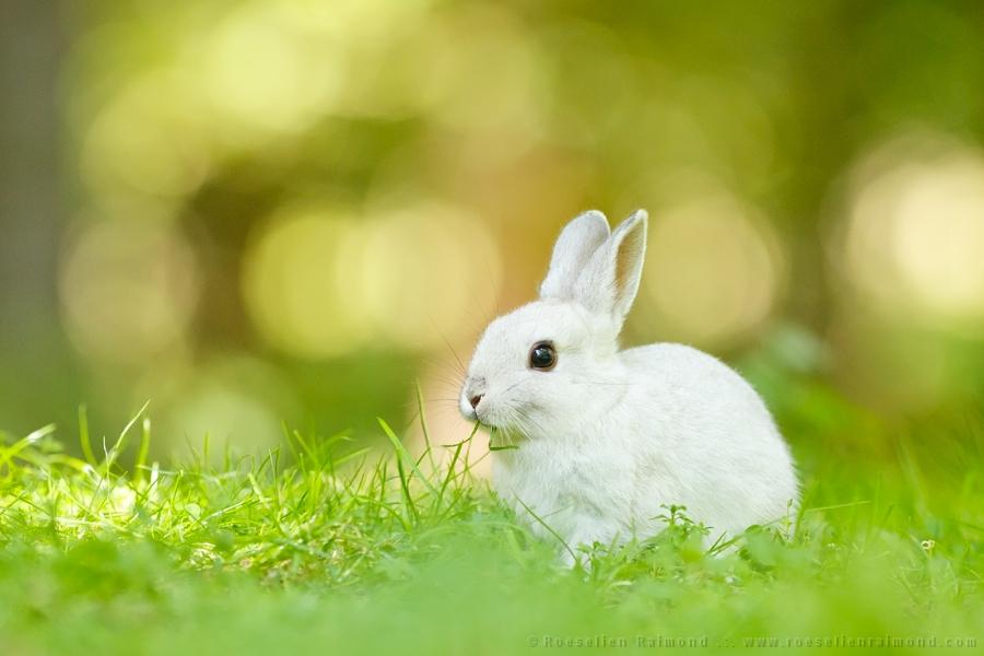 rabbit_bokeh