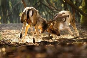 fine art wildlife photography