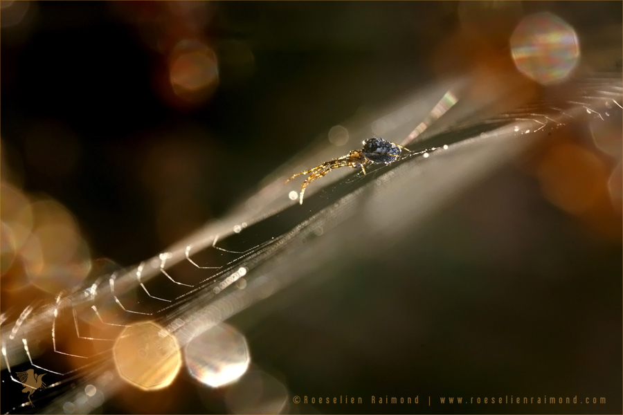 cobweb_light